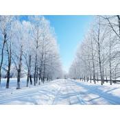 Autunno-Inverno (14)